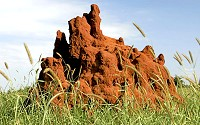 Recycling factories of the natural world, termite mounds exude streams of carbon dioxide as termites break down plant matter.