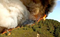 A wildfire releases large amounts of carbon dioxide as the fire crawls through vegetation.