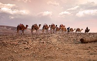 Camels are known as the 'ships of the desert.