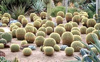 Most desert plants are drought and salt tolerant.
