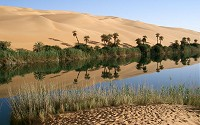 An oasis is an isolated area of vegetation in a desert, typically surrounding a spring, underground river or aquifer.