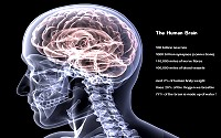 The human brain is probably the most complex structure in the known universe.